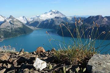 Liebe Grüße vom Garibaldi Lake von Femke van Egmond