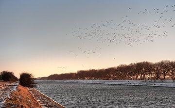 Vögel fliegen über den Winterkanal durch Walcheren von Percy's fotografie