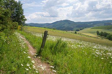 Landschap rond Winterberg, Sauerland, Duitsland van Alexander Ludwig