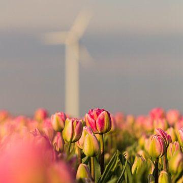 Nederlandse Tulpen onder een windmolen van Ronald Huiberse