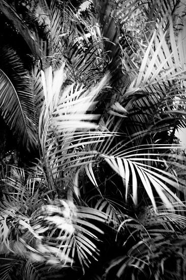wild palm tree van Dorit Fuhg