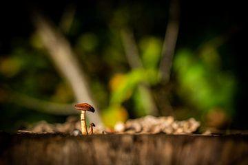 Eenzame paddenstoel van Tim Briers