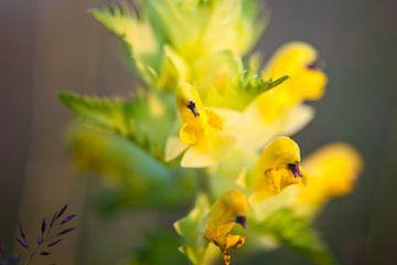 Gele bloem van Dennis Claessens