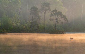 Lente in de Oisterwijkse bossen en vennen