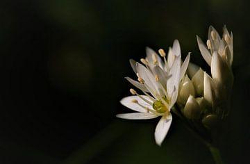 Voorjaar in groen en wit. van Peter Scheermeijer
