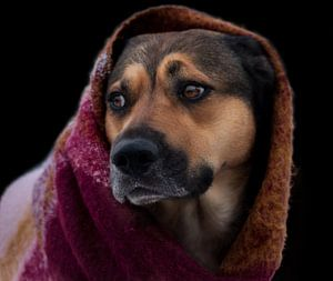 Hond met sjaal voor zwarte achtergrond van