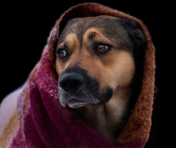 Hond met sjaal voor zwarte achtergrond