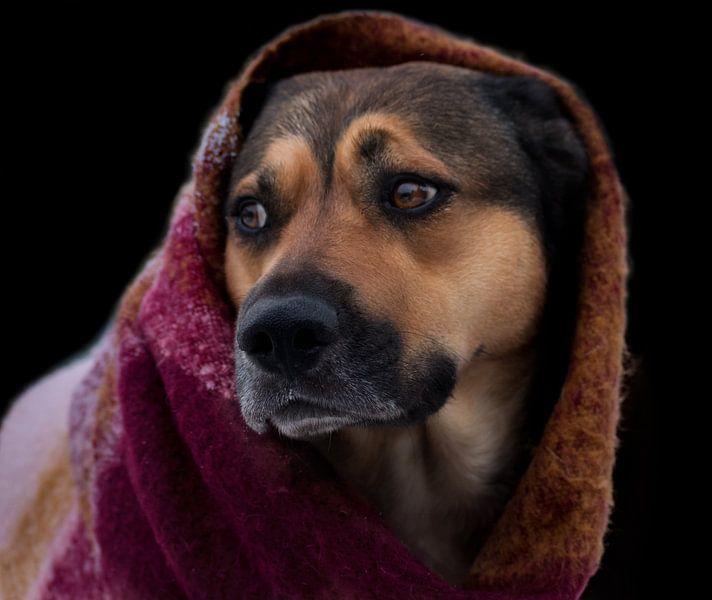Hond met sjaal voor zwarte achtergrond van Meg Branca