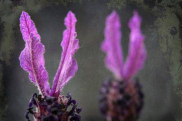 Fahne Lavendel oder Schmetterling Lavendel von Rietje Bulthuis