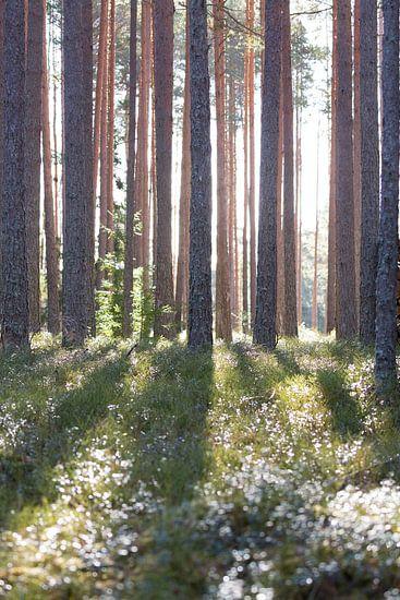 Natuur | Zonnestralen door de bomen van Servan Ott