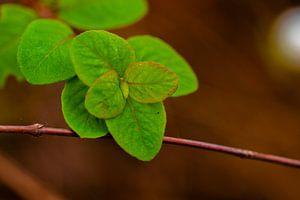 Groene blaadjes van Dianne Peeters