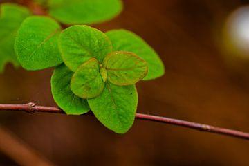 Grüne Blätter von Dianne Peeters