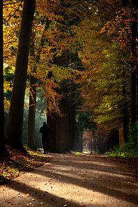 Waldspaziergang von Kristiaan Hartmann