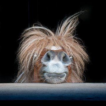 Verrücktes Pony von Marjon Birza