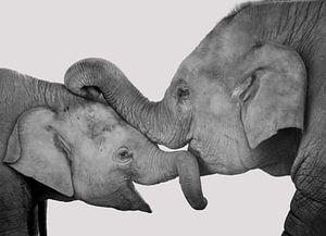 Liefde van moeder en kind, knuffelende olifanten. Zwart wit.