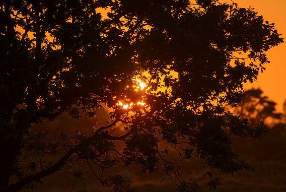 oranje zon door de boom