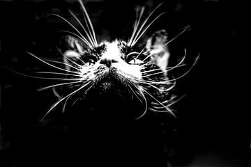 Katze Pats von gisela merkuur