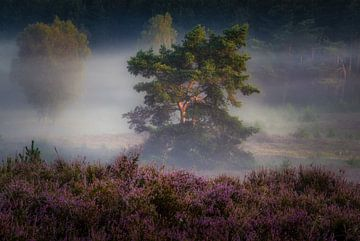 De boom achter de Heide