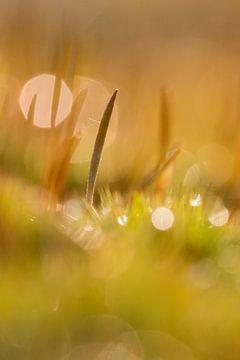 ruig haarmos bokeh von Francois Debets
