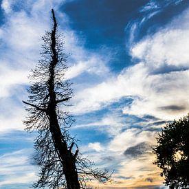 Silhouet van dode boom in het avondlicht van Peters Foto Nieuws l Beelderiseren