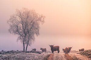 Winter op de Veluwe von Niels Barto