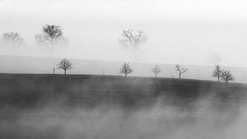 Trees in the fog van Lars Korzelius
