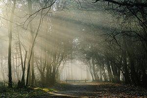 Landgoed Pijnenburg, mistig bos met hek
