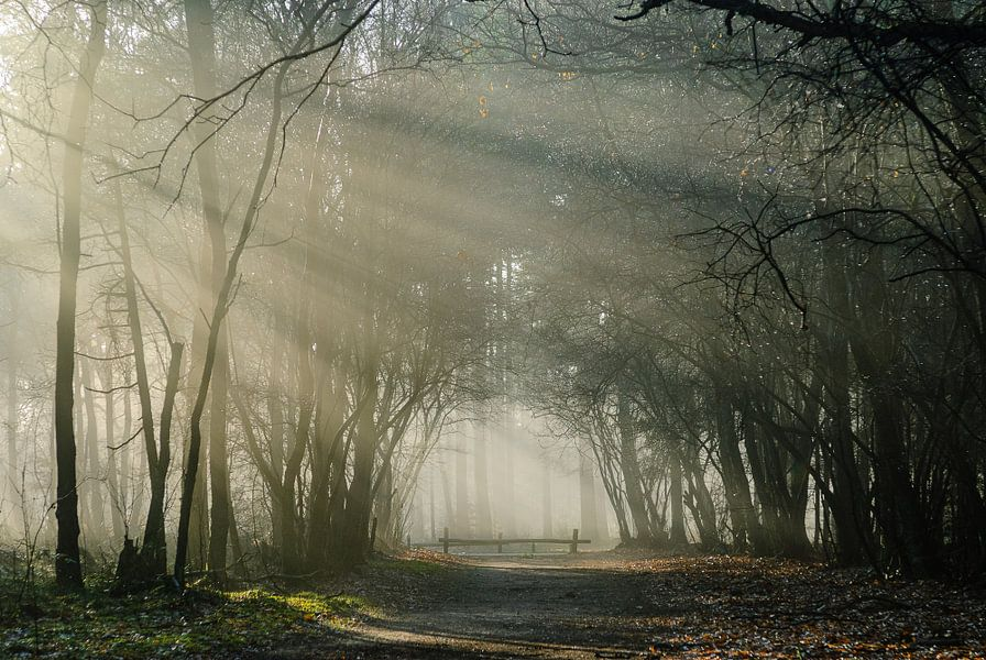 Landgoed Pijnenburg, mistig bos met hek van Martin Stevens