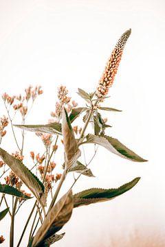 nice bouquet van Michael Schulz-Dostal