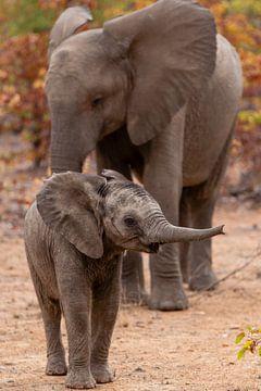 Moeder en kleine olifant in Zuid-Afrika. von Arthur van Iterson