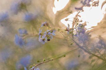 zonnige vergeet-me-nietjes van Tania Perneel