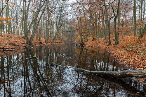 Misty autumn trough a mirrow van Marco Schep