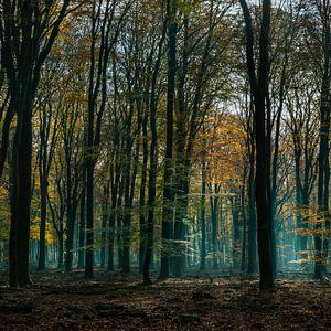 speulderbos gelderland van ÇaVa Fotografie