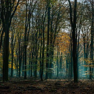 spektakulärer Waldgelder von ÇaVa Fotografie