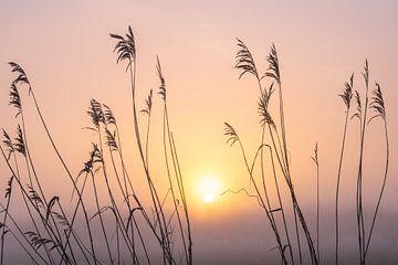 Mistige zonsopkomst von Erik Graumans