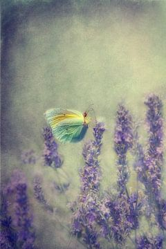 Schmetterling von Claudia Moeckel