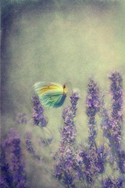 vlinder van Claudia Moeckel