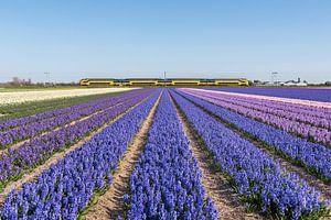 Hollands landschap van Martin Winterman
