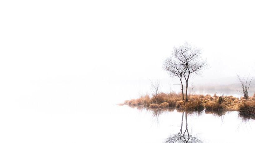 Twin trees Pano #2 van Lex Schulte