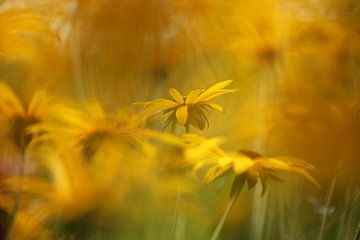 gelbe Blumen von Fotografie John van der Veen