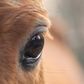 Het paarden-oog van Cathy Php