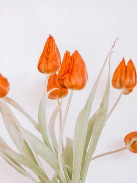 red tulip von Michael Schulz-Dostal
