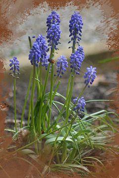 Les raisins bleus et l'abeille sur FotoGraaG Hanneke