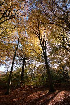 Herfstbos van Erik Reijnders