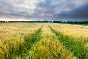 Klaar voor de oogst van Ron Buist