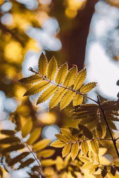 Prachtig zonlicht in het bos