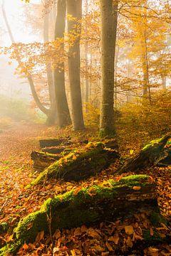 Nebel im Herbstwald von Denis Feiner