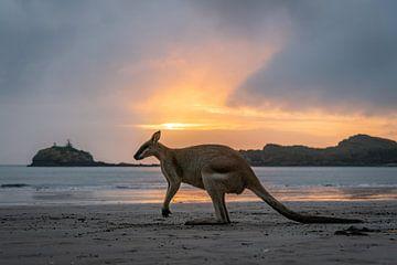 Kangoeroe bij kleurrijke zonsopkomst bij Cape Hillsborough Australie van Twan Bankers