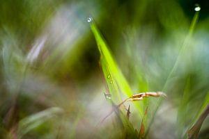 Macrofotografie gras