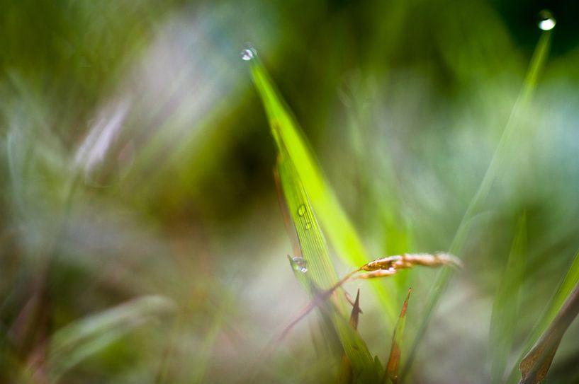 Macrofotografie gras van angelique van Riet